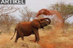 Rejs til Afrika og få en oplevelse for livet