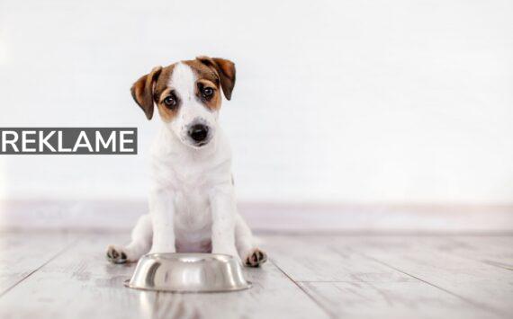 Skal I have hund? Her er 3 gode råd til jeres nye bedste ven