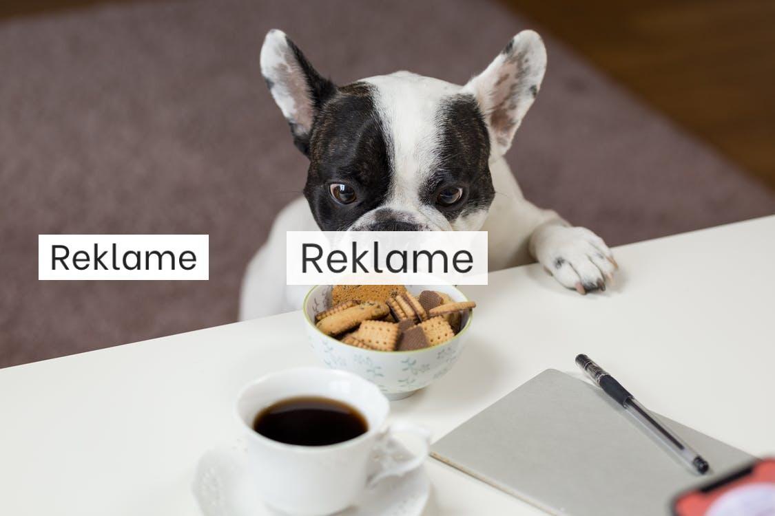 Essentielt at vælge korrekt foder til din hund